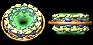 Arquitectura molecular del Complejo Poro Nuclear