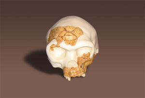 Reconstrucción en tres dimensiones del cráneo de 'Homo antecesor'