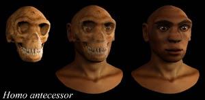 El 'Homo antecessor' era caníbal por tradición gastronómica